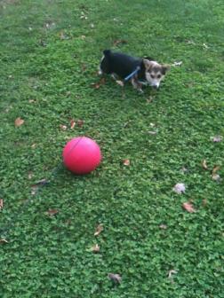 Reggie Vs. Kickball