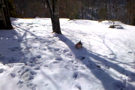 Toki Playing In The Snow, Part 1
