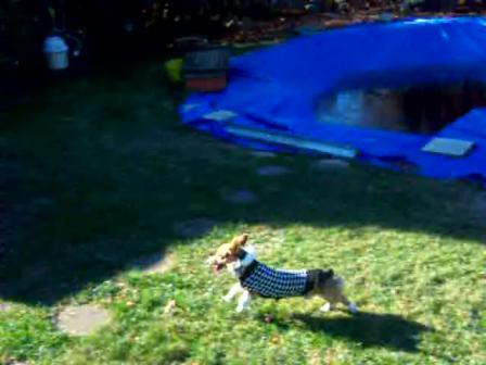 Running in Backyard