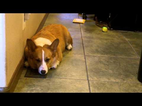 Cal Explains Leon Barking