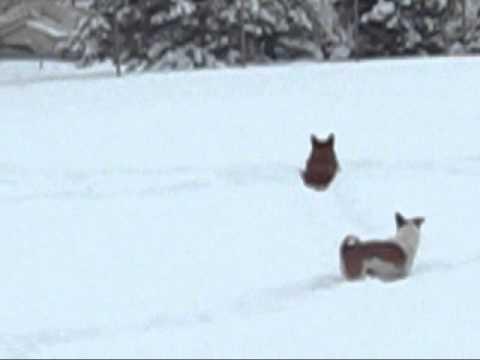 Snow Bunnies_0001.wmv