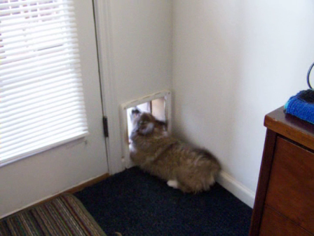 MICHIEF at the DOGGIE DOOR from BABY RANDY