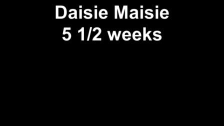 Daisie Maisie 5 1/2 weeks