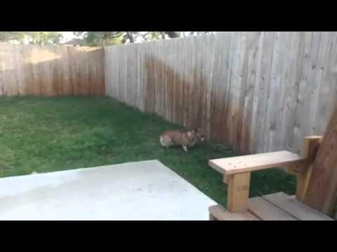 Cody vs sprinkler