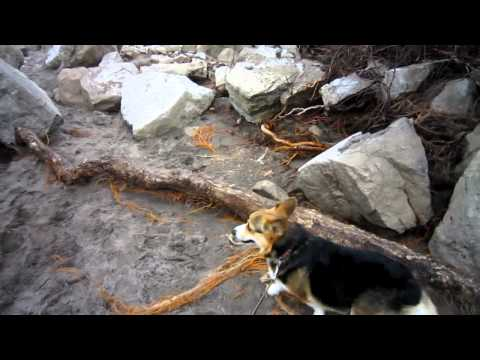 A  Corgi visit to Point Pelee on Easter Sunday 24Apr11