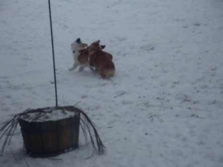 mia & herky playing in the snow