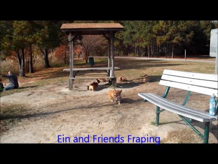 Ein and friends