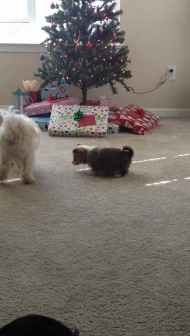 Penny's first playdate with Toby