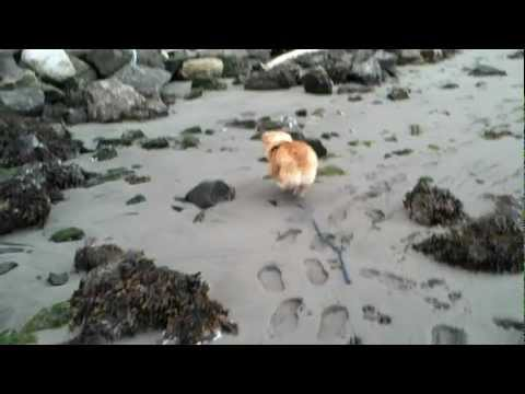 Ein goes swimming! And FRAPING.