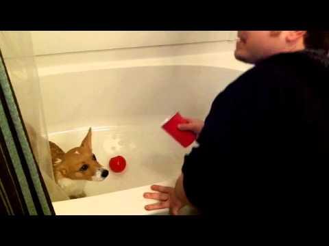 Saber First Bath