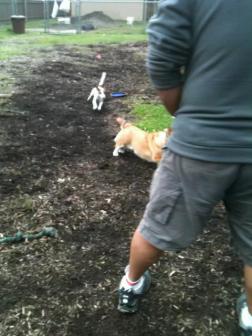 Running around the dog park