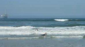 corgi bunny hops in surf