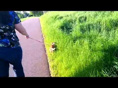 Saber in tall grass