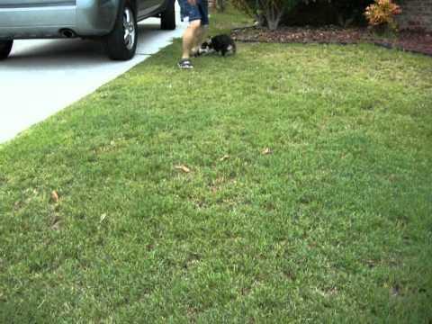 Louie Playing in Frontyard