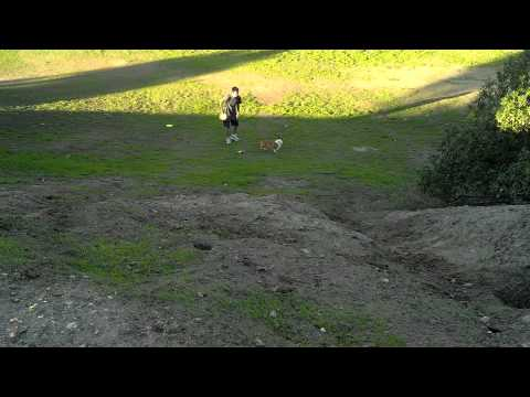 My brother and Luffy racing up a hill at a Disk golf field today