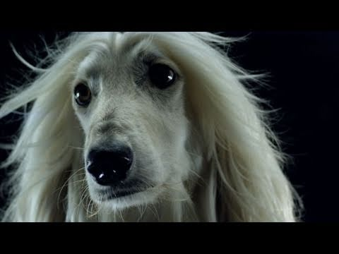 Swedish House Mafia - Save The World (Official Music Video)