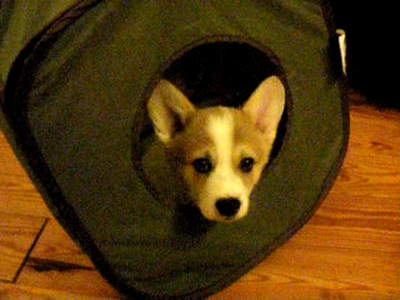 Wilson Playing in His Cube 11-25-2012