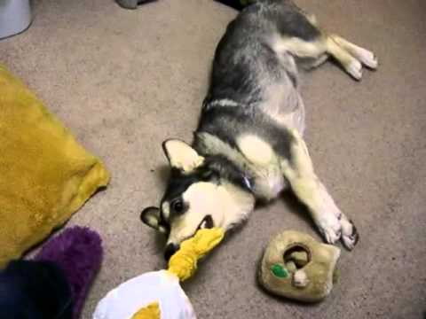 Tug-o-duck