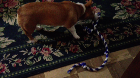 Maya and her new rope.