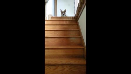 Murray steps