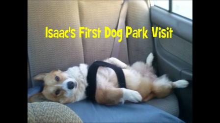 Isaac's first dog park visit