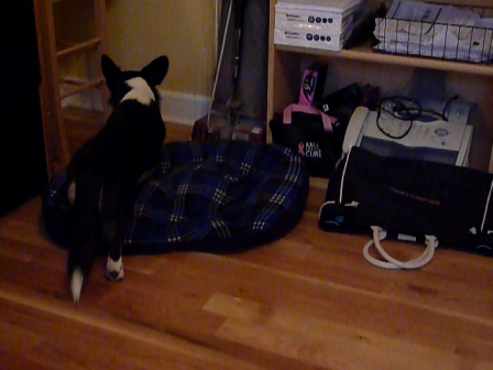 How to bury a bone in your dog bed