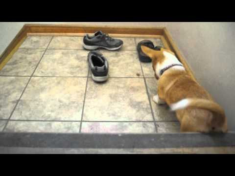 Saber Plays with a treat on the landing.AVI