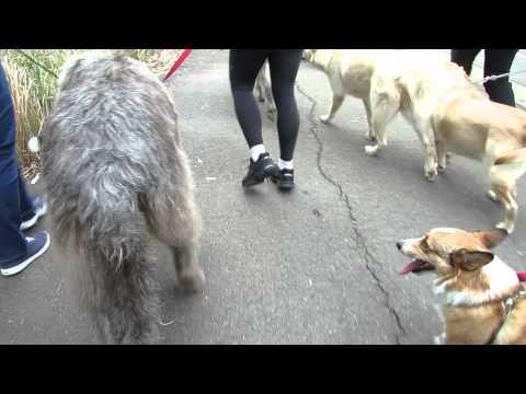 Million Paws Walk 2014  - Sheamus