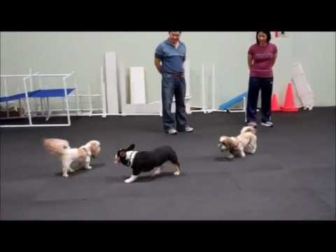 10/12/12 Small and Medium Dog Social
