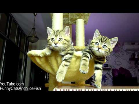 Kittens watching tennis