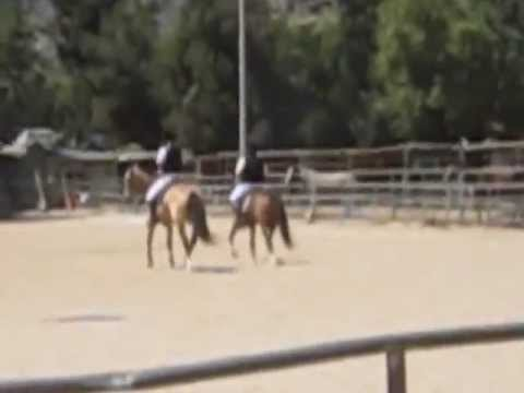 Total Equestrian Experience~ Dog Days are Over Dressage Kur