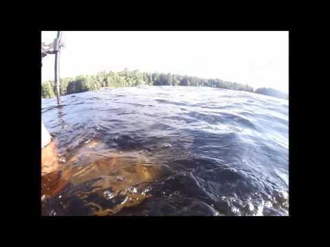 Underwater Muskie and Pike Release