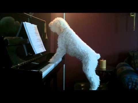Even dogs SingPeace!