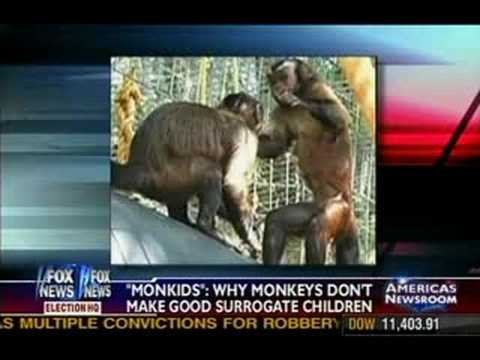 """Monkids"" : Why Monkeys don't make good surrogate children"