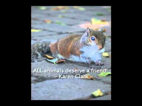 Be Kind to Animals Project (promo video)