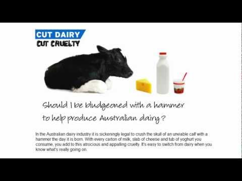 Did you know this about cows, calves and Australian Dairy?