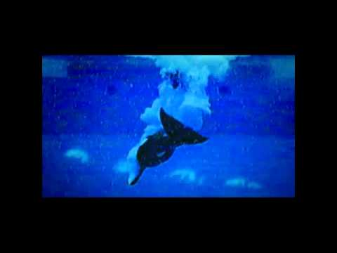 'Blackfish'  ~  Trailer 2013
