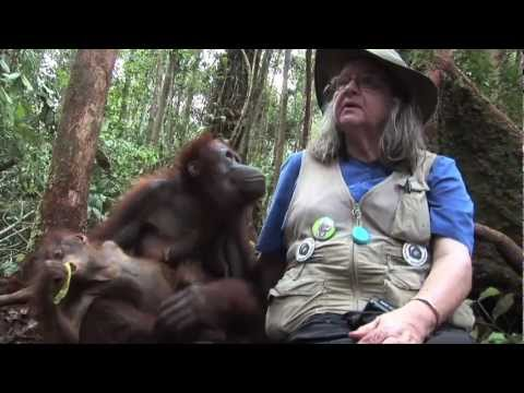 FreeAnimalVideo.org Visits OFI (Orangutan Foundation International) in Indonesia