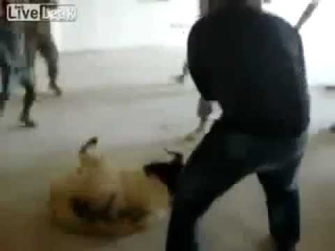 "US Soldiers Torturing Animals  ""Graphic"" [STOP Animal ABUSE] 2011"