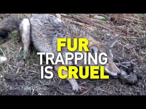 Fur Trapping Is Cruel