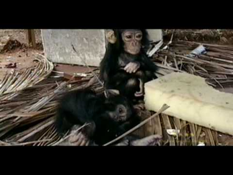 Illegal Commercial Bushmeat Trade