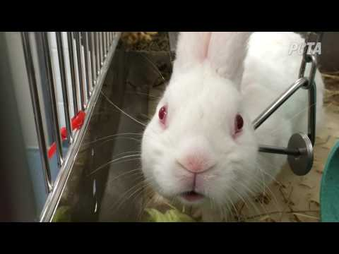 Rabbits Mutilated, Monkeys Driven Mad in Experiments