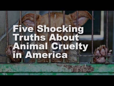 Five shocking facts about animal cruelty in America