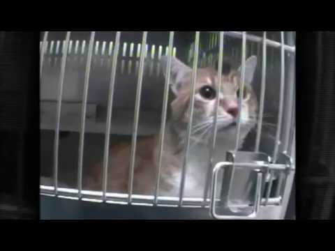 Animal Testing in 60 Seconds | Jesus People for Animals