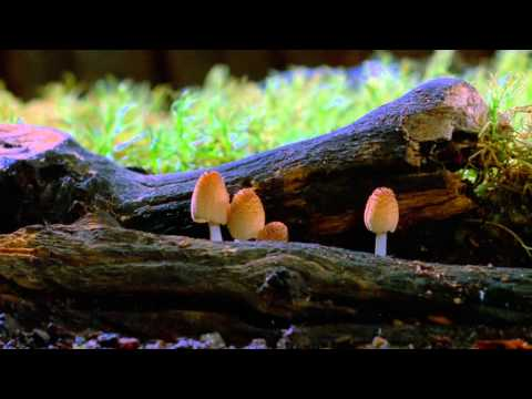 Fantastic Fungi:  The Forbidden Fruit