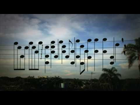Birds on a wire compose a song!