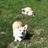 Krystle (Luna & Twinkie!)