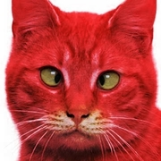 RED CAT-Katerina