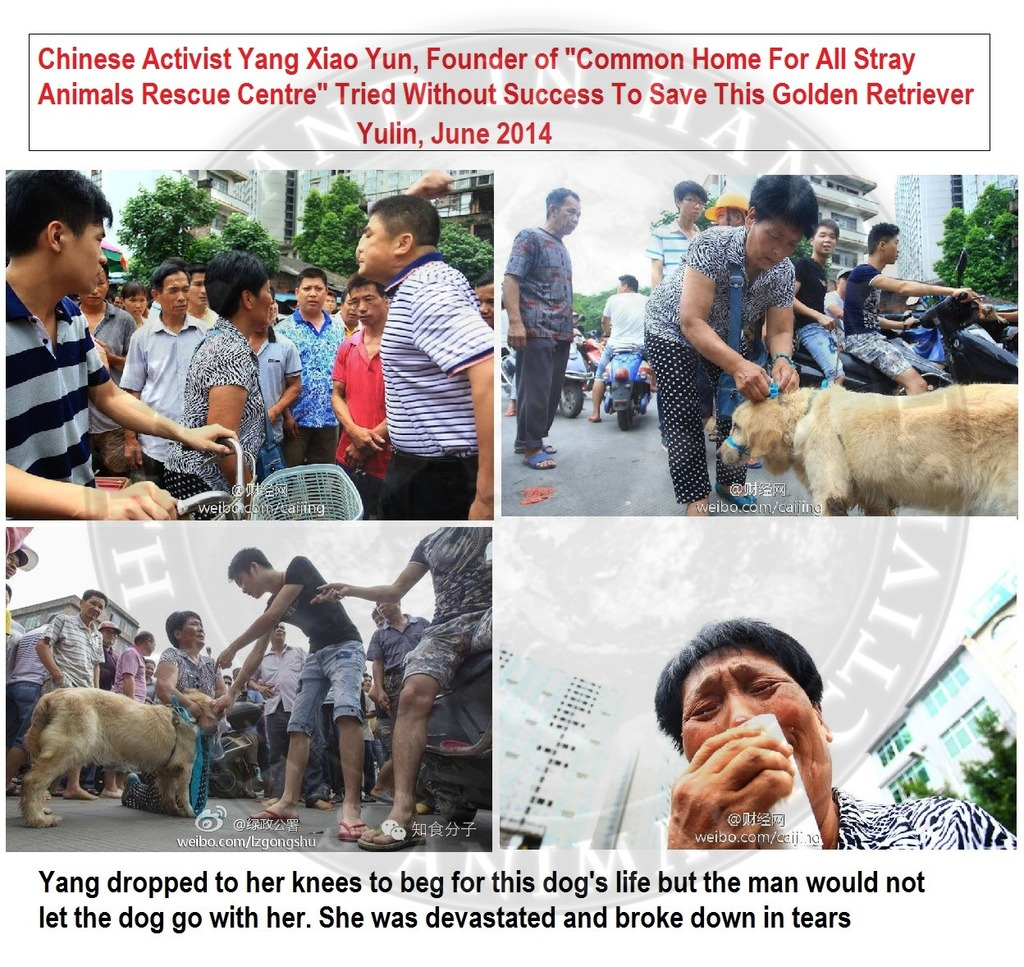 China:~ACTIVIST YANG TRIED TO SAVE GOLDEN RETRIEVER FROM SLAUGHTER