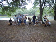 The Saint Petersburg Corgi June Meeting (FL)